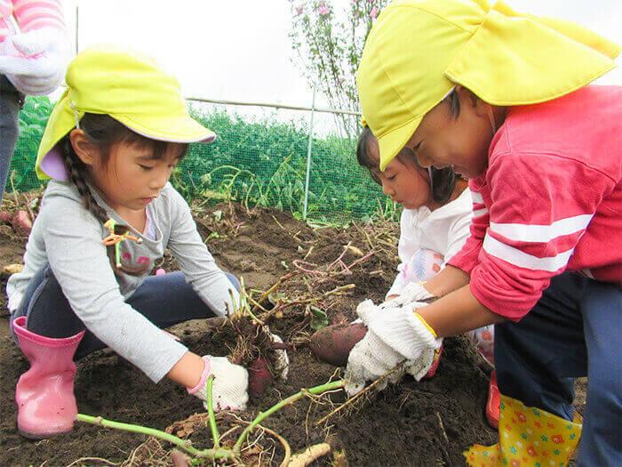 畑の収穫1