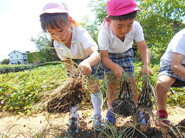 畑の収穫2