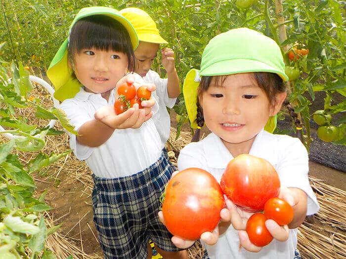 畑の収穫3